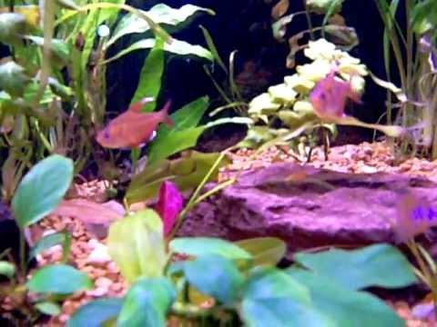 Planted Aquarium Update