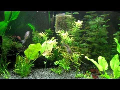 Lost Video - Fish Health.MP4