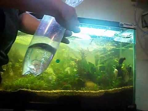 How To Acclimate A Fish To An Aquarium