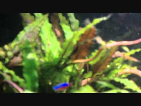 50L planted aquarium