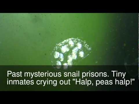 Little Shrimp in a Large World