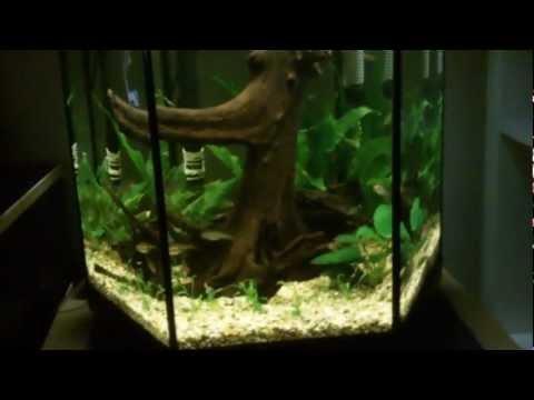 16g/60l Aquael Planted Aquarium