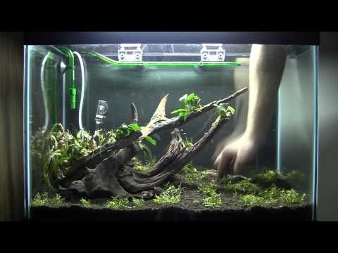 How to Aquascape