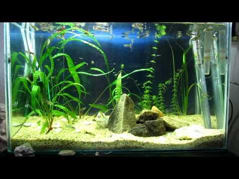 My Planted Aquarium - 3th Week after Setup