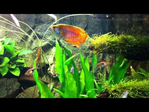 A Planted aquarium opdate