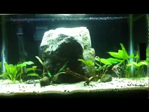 Planted Aquarium Day 1