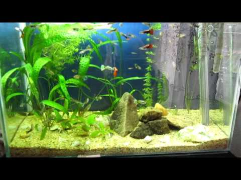 Planted Aquarium - Week 7 Update
