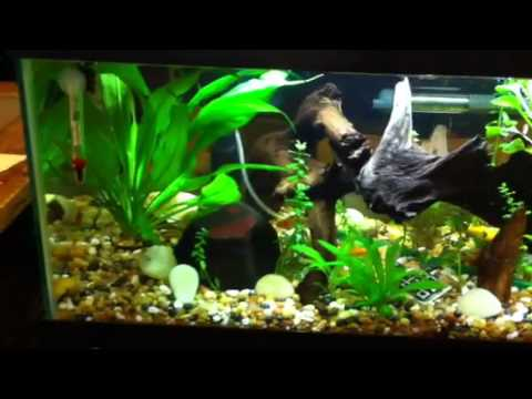 20 Gallon Freshwater Fish Tank