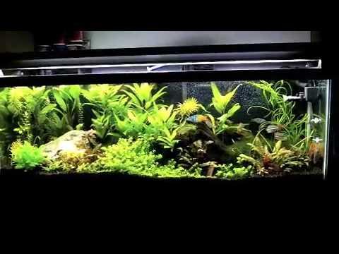 Planted Aquarium DIY co2 Mix