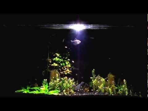 Cree XM-L T6 led without focusing lens over 50 Gallon