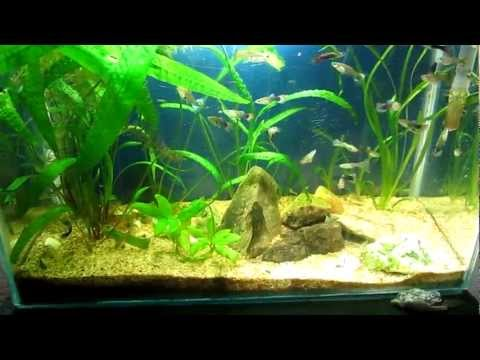 My Planted Aquarium - week 13