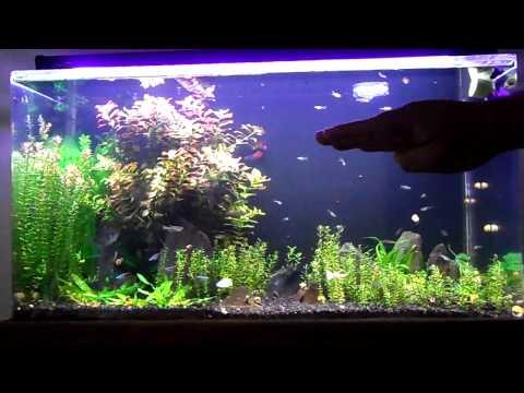 Sea Clear System II 50 Gal Update 3