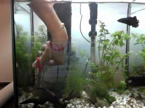 plants trimming / fishtank update