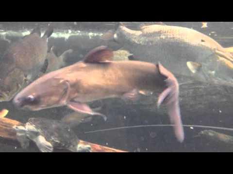 10,000 GALLON AUSTRALIAN FISH TANK!