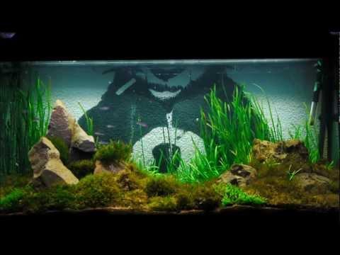 Long chillout Aquarium watching, Moss aquascape