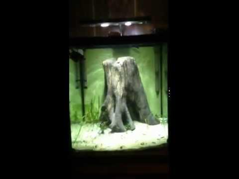 Lonesome Al's Brackish Aquarium