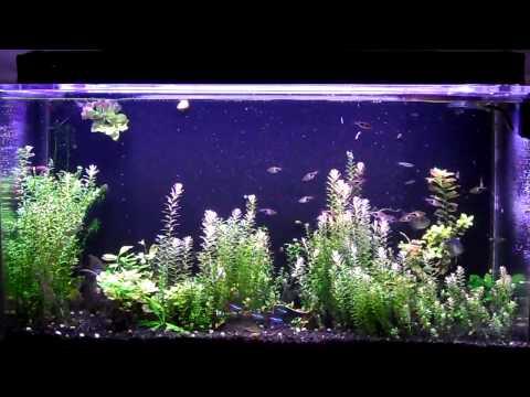 Sea Clear System II 50 Gal Update 6 Water change