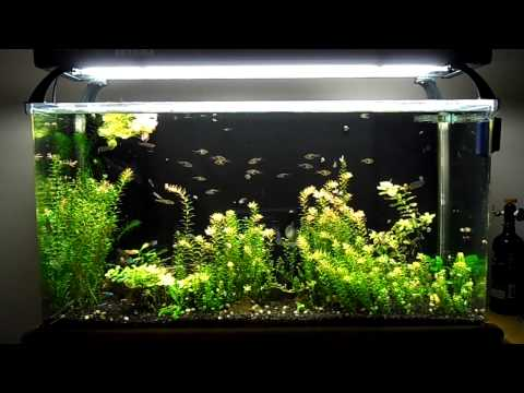 SeaClear System II Update 7 New Lights