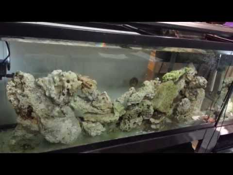 Update on the Reef 4/24