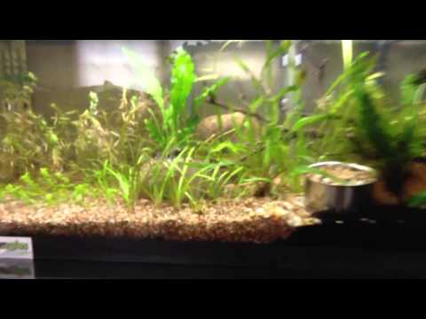 Planted tank journal: Day 9