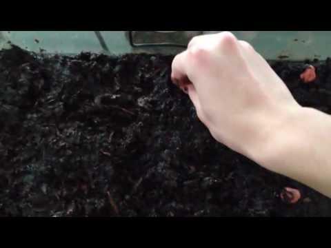 Dirting an Aquarium: Part 2