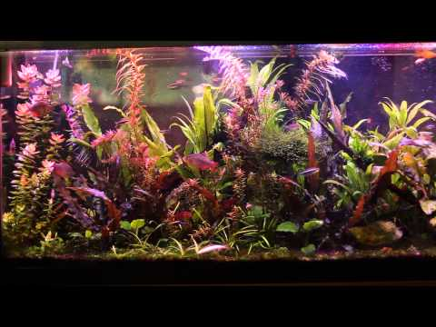 50 Gallon Aquarium DIY LED 3 week update.