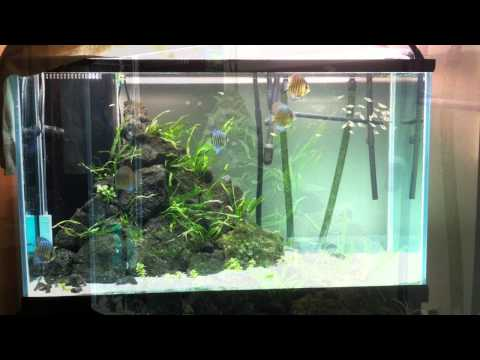 Discus tank from beginning to end