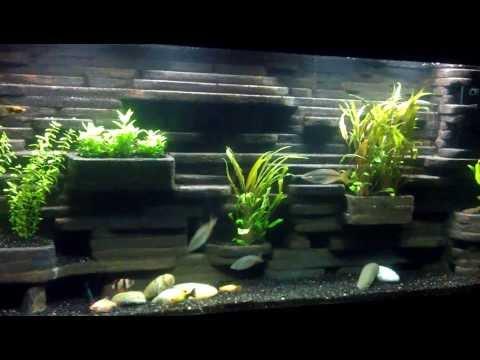 55 gallon diy aquarium background