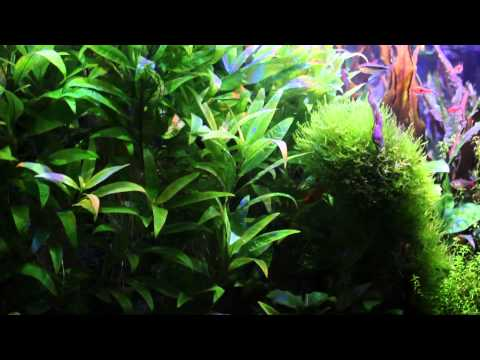Long video of the 50 Gallon Aquarium