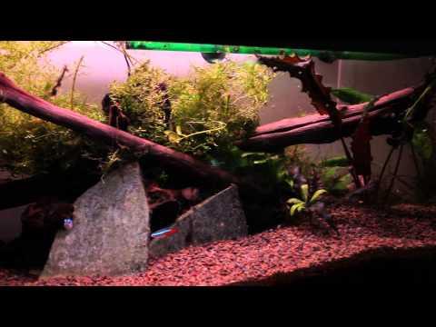 22 Gallon long aquarium.