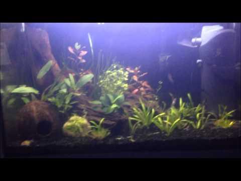 Aqua Alex 50th video entry #JamesMowgli