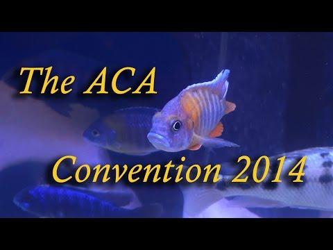 2014 ACA Convention Louisville