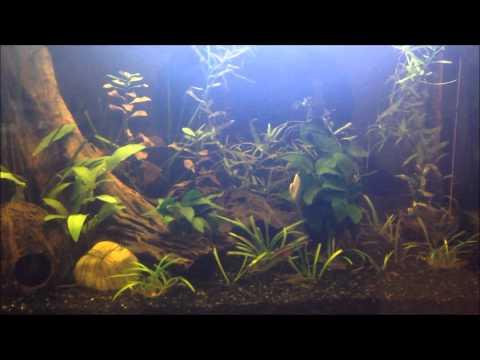 Mowglis Aquarium New Twist