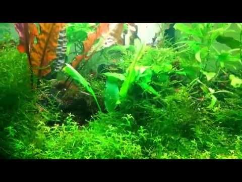 15 gallon aquarium. Overgrown again.