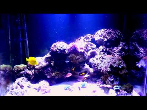 This is my reef keepin journey