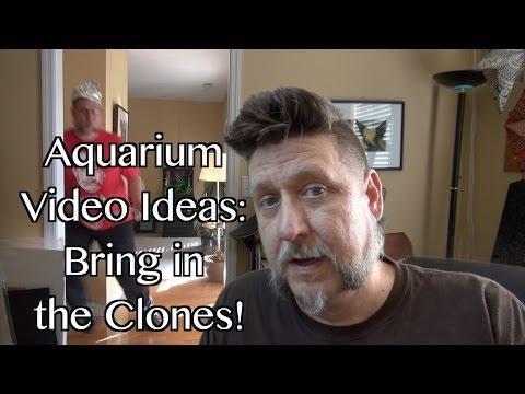 Aquarium Ideas: Bring in the Clones!