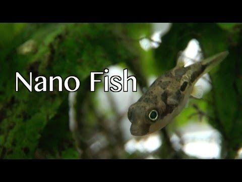 Nano Fish