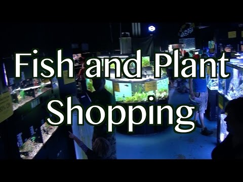 Fish and Plant Shopping