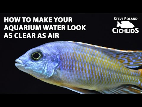 How to Make Your Aquarium Water Look As Clear As Air