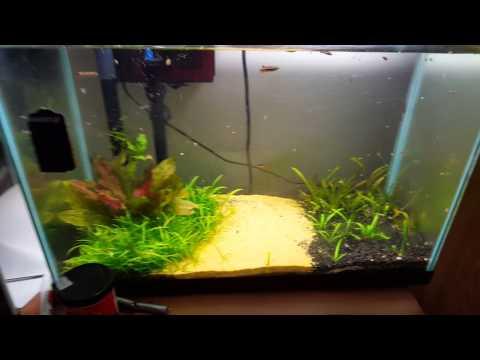 How to aquascape an aquarium