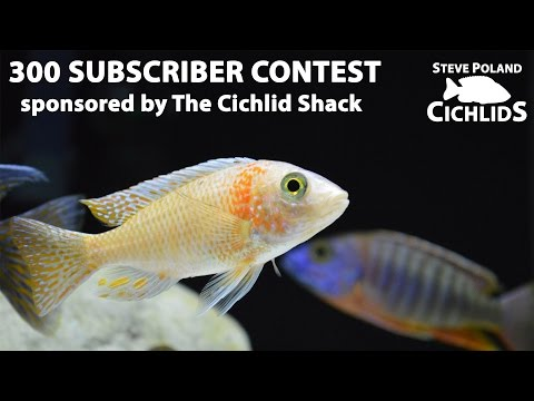 300 Subscriber Contest sponsored by The Cichlid Shack