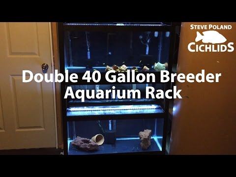 Tank Updates: Double 40 Gallon Breeder Aquarium Rack