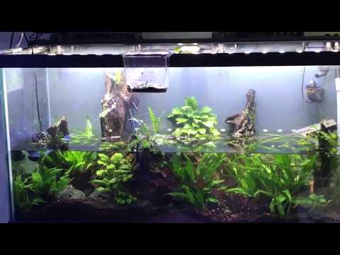 90 Gallon Low-Tech Planted Aquarium