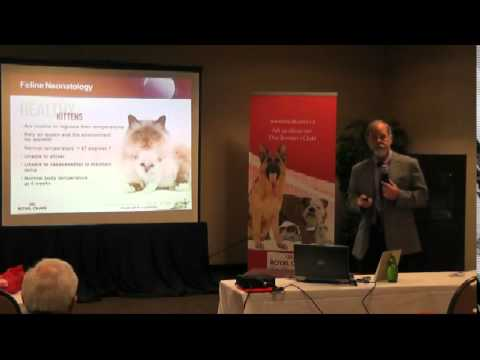 Feline neonatology part I