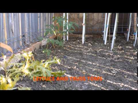 brisbane ben's vegetable growers group