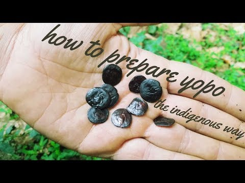 How to Prepare Yopo the Traditional Way (snail shell activator)