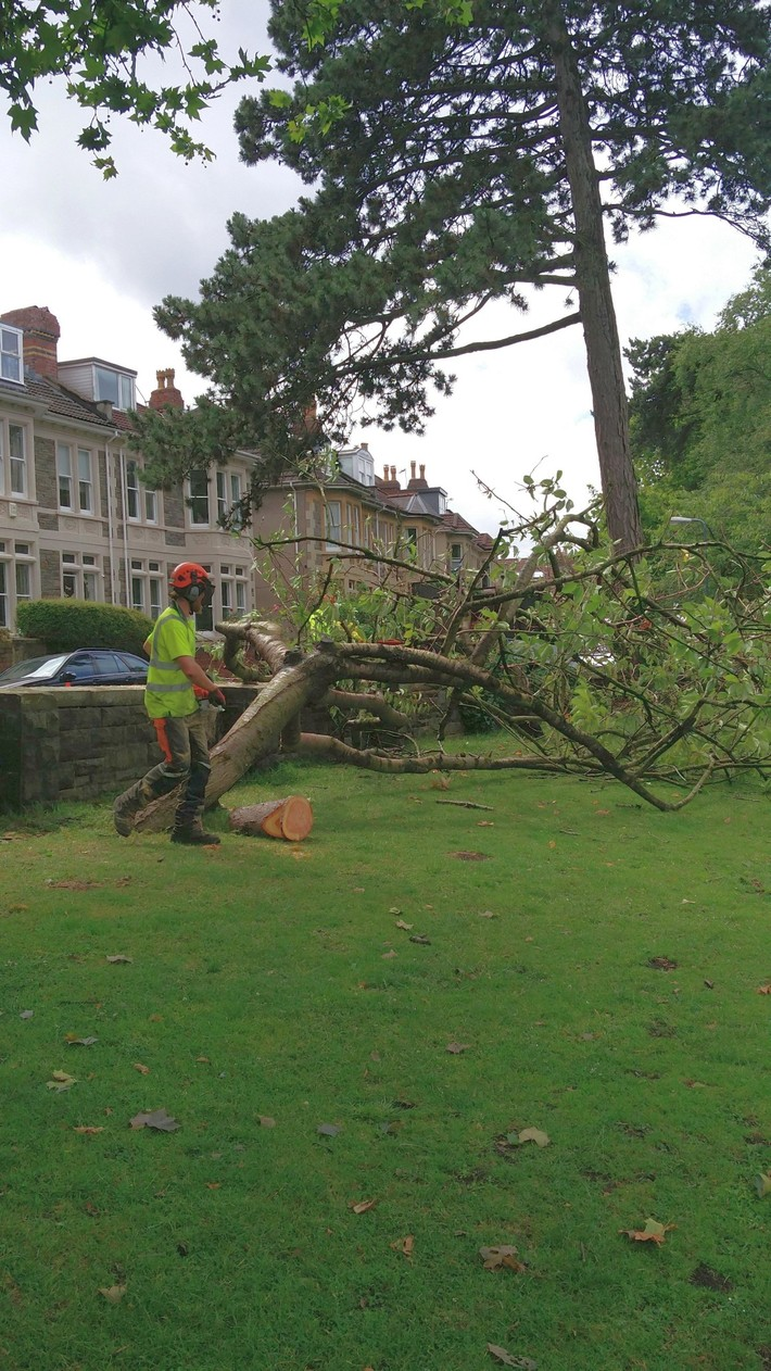 Tree felling 20.6.20
