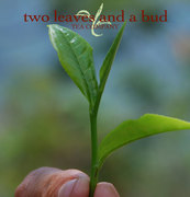 two leaves and a bud tea co.
