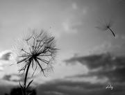 fotografia/photo