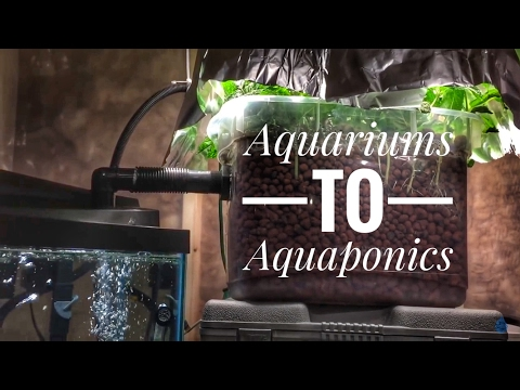 Aquariums To Aquaponics: A cheap and easy first system for fish tank people